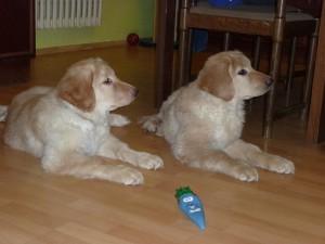 Daffy a Daulie